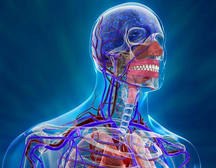 Stenosing atherosclerosis